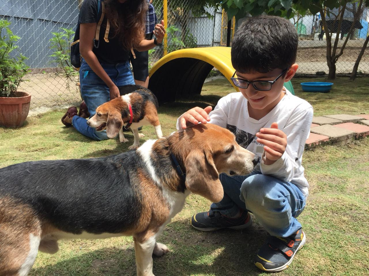 resq charitable trust super beagles with hearts of gold